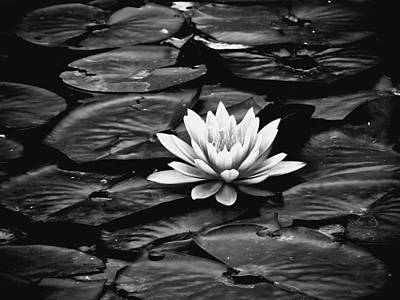 Lilly Pond Mixed Media - Water Lilly Bw by Connie Dye