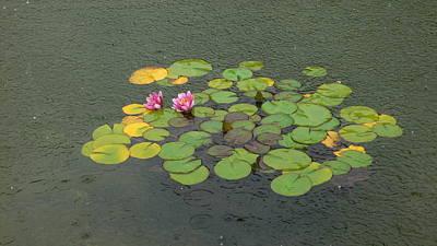 Water Lilly In Rain -1 Art Print by Muhammad Hammad Khan