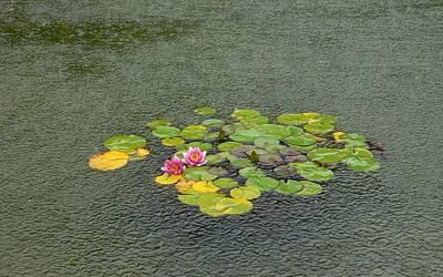 Water Lilly In Rain -2 Art Print by Muhammad Hammad Khan