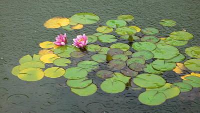 Water Lilly In Rain -3 Art Print by Muhammad Hammad Khan