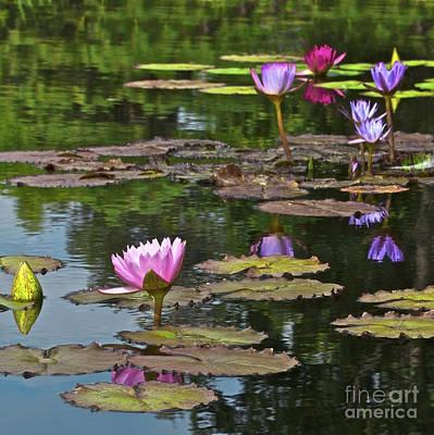 Water Lily Jewels Art Print by Crystal Garner