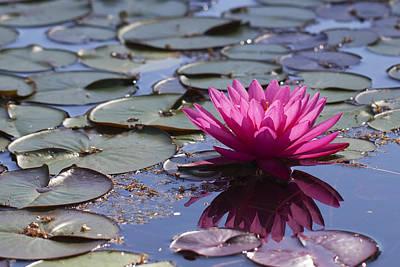 Water Lily Art Print by John Noel