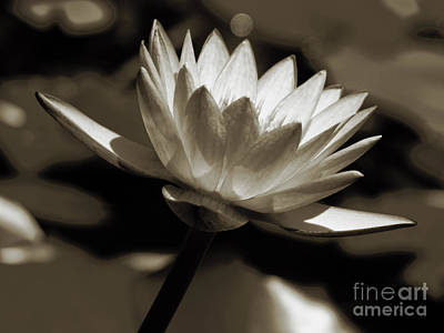 Photograph - Water Lily by Karen Lewis
