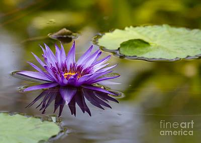 Photograph - Water Lily Kissing The Water by Sabrina L Ryan