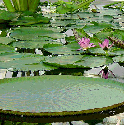 Water Lily Land IIi Art Print by Suzanne Gaff