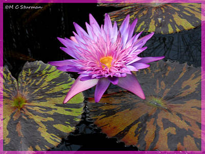 Mixed Media - Water Lily Magic by M C Sturman
