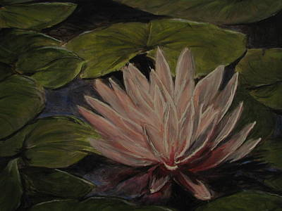 Painting - Water Lily by Sherry Robinson
