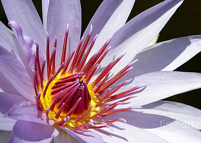 Photograph - Water Lily Soaking Up The Sun Light by Sabrina L Ryan