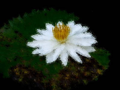 Photograph - Water Lily Solitaire by Chua  ChinLeng