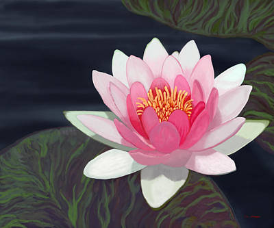 Water Lily Art Print by Tim Stringer