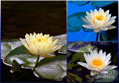 Photograph - Water Lily Triptychs by Ken Frischkorn
