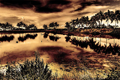 Water Art Print by Nicky Ledesma