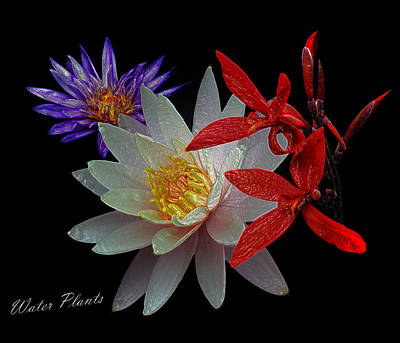 Photograph - Water Plants by David Lester