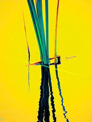Water Reed Reflections  Art Print by Beth Akerman