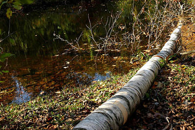 Photograph - Water Seeing by LeeAnn McLaneGoetz McLaneGoetzStudioLLCcom