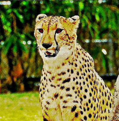 Photograph - Watercolor Cheetah by Carol  Bradley
