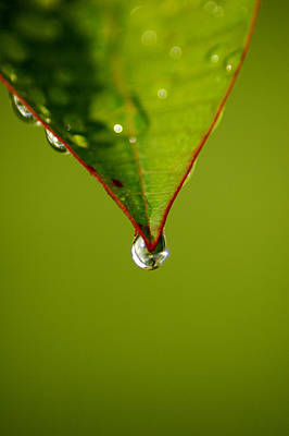 Photograph - Waterdrop by David Weeks