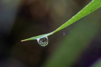 Waterdrop Spider Original