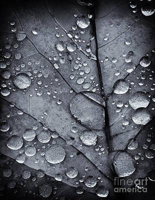 Photograph - Waterdrops II by David Waldrop