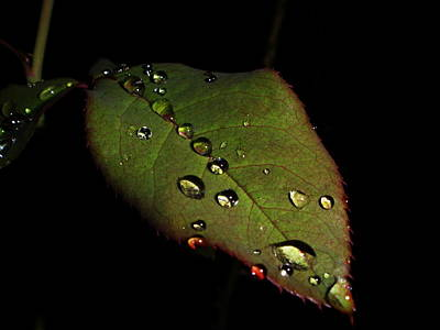 Watered-leaf Art Print by Rosvin Des Bouillons