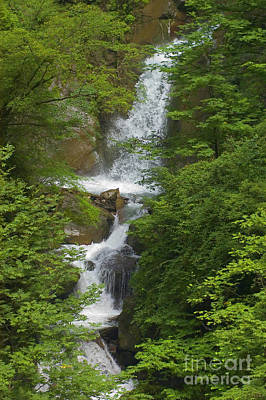 Photograph - Waterfall - Wolong Panda Reserve China by Craig Lovell