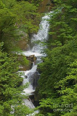 Photograph - Waterfall - Wolong Panda Reserve China by Craig Lovell