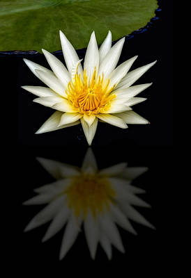 Waterlilies Photograph - Waterlily And Reflection by Susan Candelario