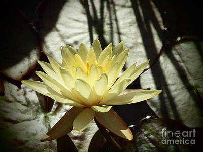 Photograph - Waterlily In Shadows by Tammy Bullard