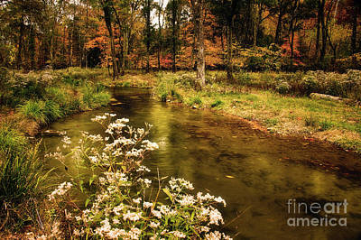 Photograph - Waterside Flowers At Beaver's Bend by Tamyra Ayles