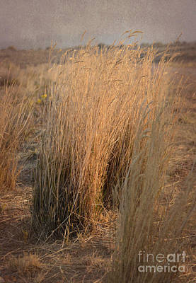 Photograph - Waves Of Grass by Donna Greene