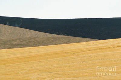 Photograph - Waves Of Grass by Frank Townsley
