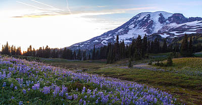 Mount Mazama Photograph - Waves Of Purple by Mike Reid