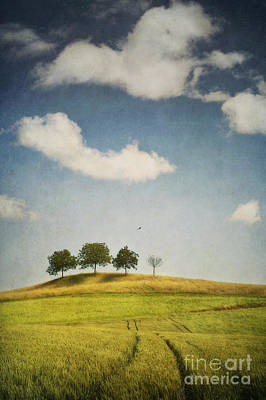 Country Side Photograph - We Are 4 by Priska Wettstein