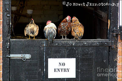 We Don't Give A Cluck Art Print