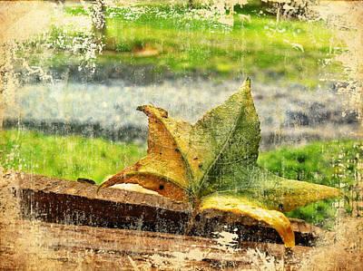Nature Photograph - Weakened Presence by Gene Hilton