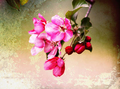Photograph - Weathered Blossoms by Alyce Taylor