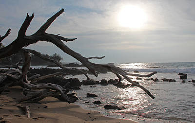 Photograph - Weathered On A Hawaiian Beach by Kerri Ligatich