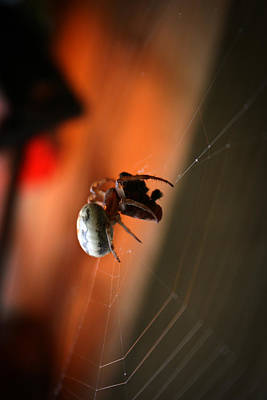 Spider Photograph - Web Delights by Christine Gauthier