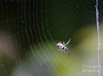 Photograph - Web Designer by Erica Hanel