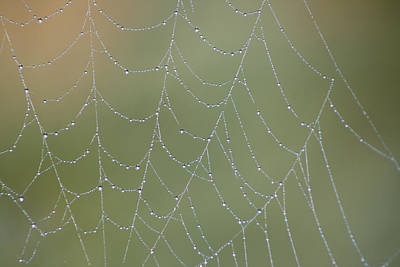 Photograph - Web Drops by Cathie Douglas