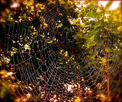 Web Illusion Art Print by Gloria Warren