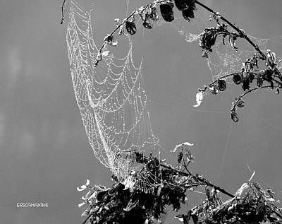 Photograph - Web In The Rain B-w by Ericamaxine Price