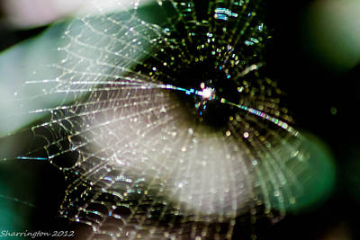Photograph - Web Light by Shannon Harrington