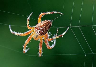 Web Maker Art Print