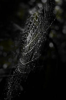 Spider Photograph - Web Of Depth by Christine Gauthier