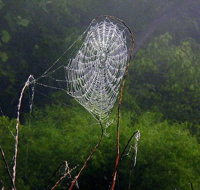 Photograph - Web Over Foggy Lake by Ericamaxine Price