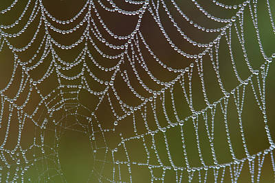 Photograph - Web With Dew by Daniel Reed