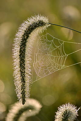 Photograph - Webbed Tail by JD Grimes