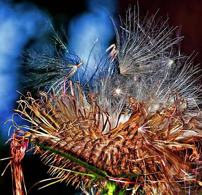 Weed Digital Art - Weed Orgy Buzzed by Steve Harrington