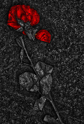 Weep Of A Rose  Print by Empty Wall